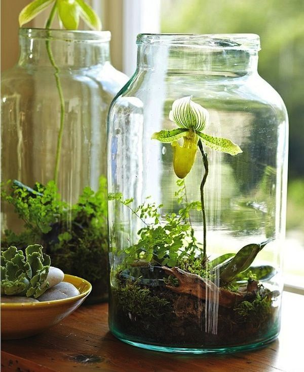 An orchid in a Mason Jar.Ideas, Green Thumb, Plants, Gardens, Moss Terrarium, Orchids Terrariums, Mason Jars, Flower, Diy Projects