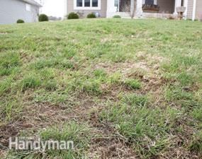 Not-so-green acres how to revive a lawn in one season