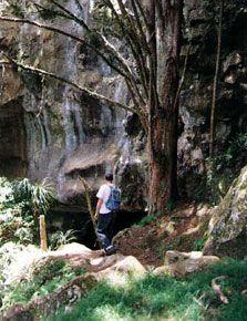 waipu cove caves
