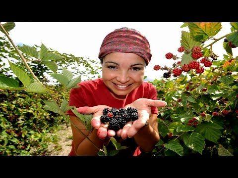 O impressionante jardim comestível de Jaqueline Lopes. Você não pode perder! | Somos Verdes