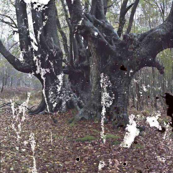 Kollatou and Toumpanos Documentary Photography - Persephone's Nightmare