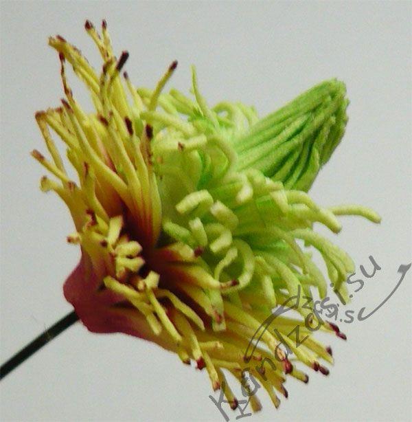 Серединка цветка с окрашенными тычинками