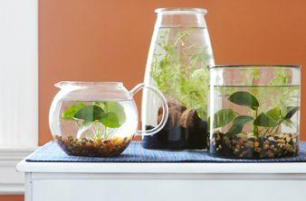 Jardins aquatiques d'intérieur simples