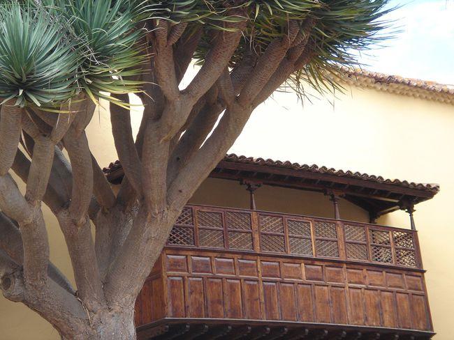 Balcón canario y drago en San Cristóbal de La Laguna (Santa Cruz de Tenerife)