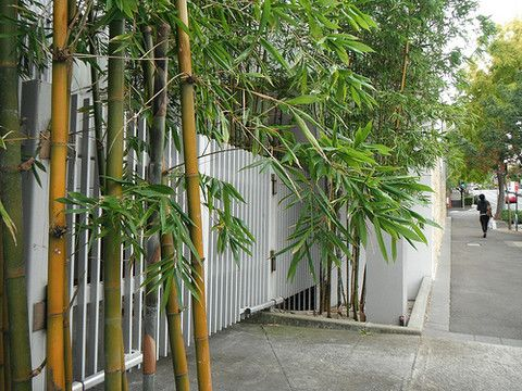 32 Best Images About Bamboo Fence On Pinterest