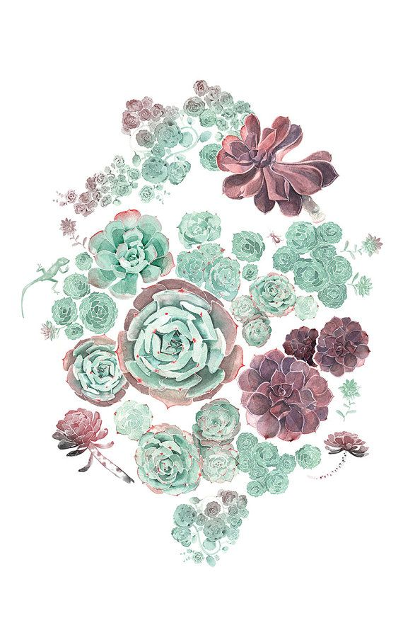 Living Together is a pattern created from sketchbook drawings of: Echeveria Fred Ives & Blue Sky, Sempervivum, Stonecrop, Aeonium and Sedeveria