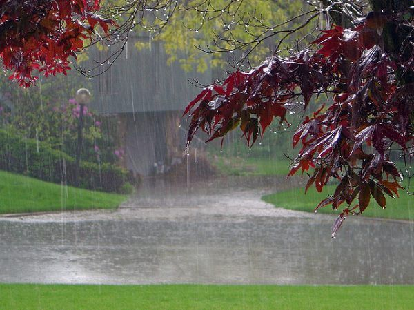 Why Are Rain Sounds Relaxing Rain Wallpapers Beautiful Nature Nature Wallpaper