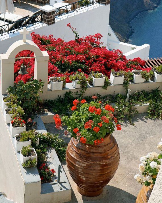 Mediterranean Decor - Santorini Greece Photograph - Pink Flowers - Red Geraniums Photography - Rooftop Garden Photo - Greek Travel Art Print