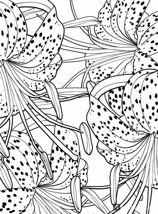 Иллюстрация 3 из 18 для Дивный сад. Раскраска-антистресс | Лабиринт - книги. Источник: Лабиринт