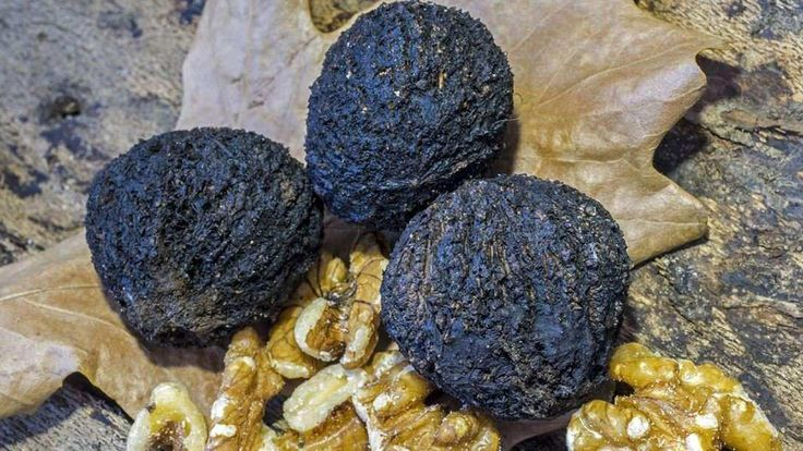 The Amazing Health Benefits of Black Walnut  http://www.corespirit.com/amazing-health-benefits-black-walnut/