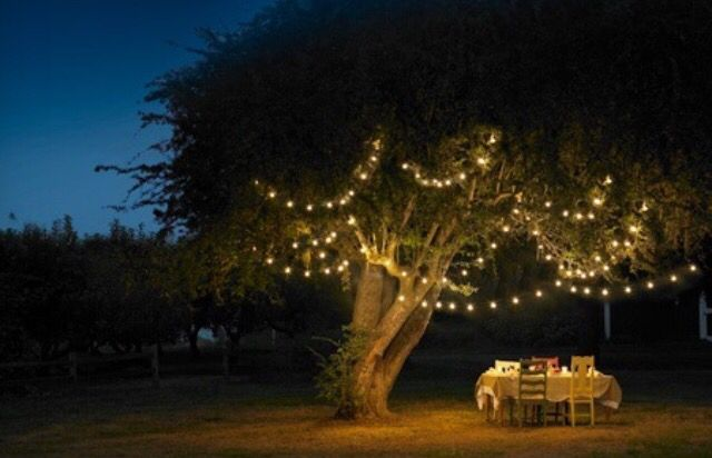 Fairy lights are super cute to hang in trees for bbq parties