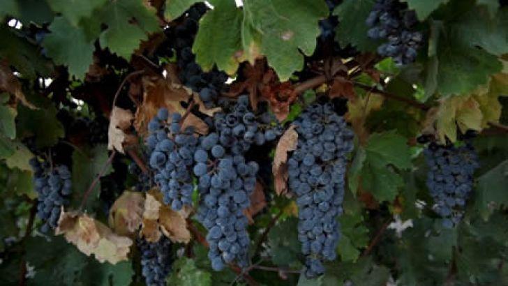 Científicos descubren que el vino podría ser buen tratamiento contra el acne   Noticias de Villavicencio, el Meta, Colombia y el mundo. notillano.com