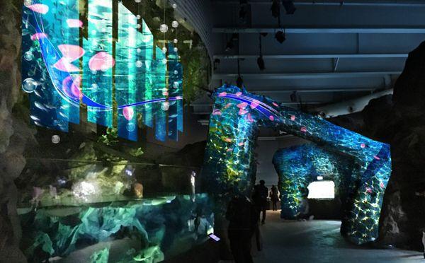 デートにオススメ♡海×花の幻想的なプロジェクションマッピングがアクアパーク品川でスタート   ガジェット通信