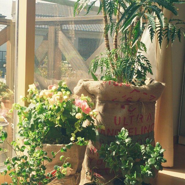 観葉植物 /麻袋の鉢カバー…などのインテリア実例 - 2014-03-09 21:32:06