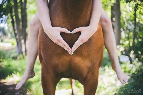 #Pferd #Hände #Herz