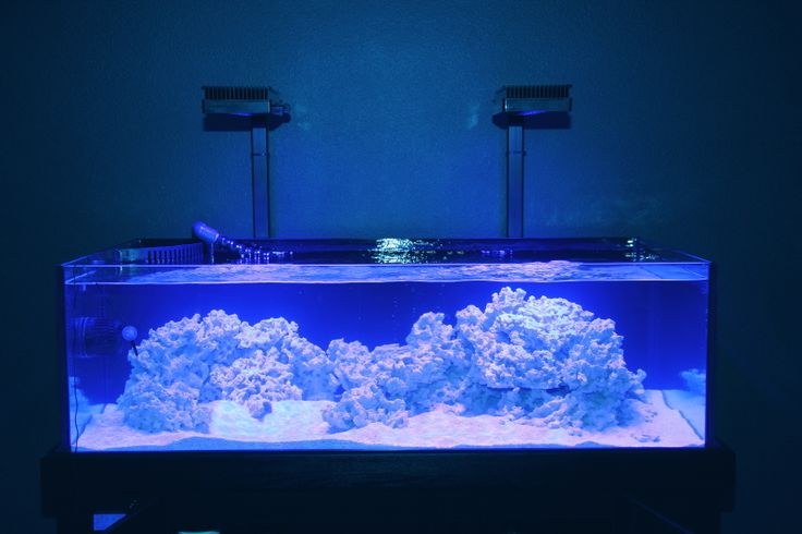 37 best shallow reef tank images on pinterest fish for Fish tank riddle
