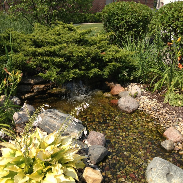 37 best images about back yard ideas on pinterest for Fish pond features
