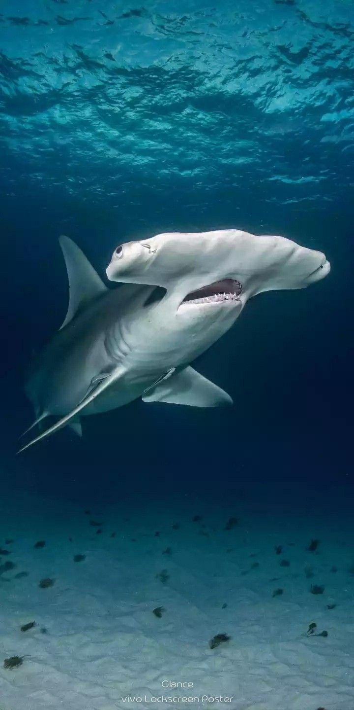 Pin Von Annett G Auf Animals Hd Wallpaper Wassertiere Meerestiere Tierbilder