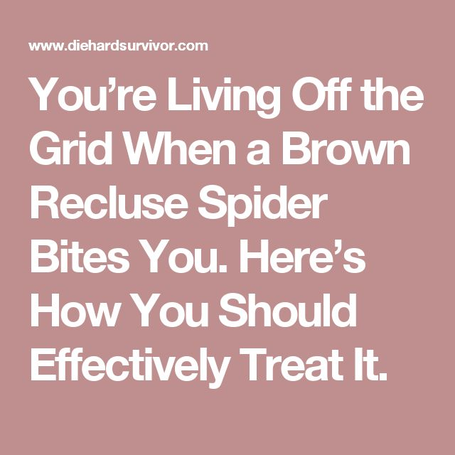You're Living Off the Grid When a Brown Recluse Spider Bites You. Here's How You Should Effectively Treat It.