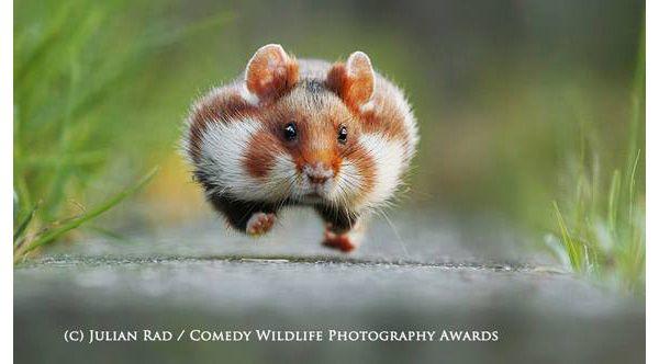 Названы самые смешные фотографии животных в 2015 году