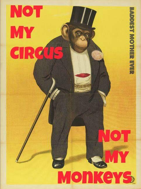 monkey.jpg (483×648)