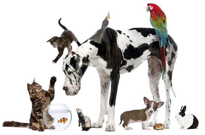 Hospital veterinario 24 hrs medica animal | 5538-0759 | Hospital veterinario | hospital veterinario df | veterinario | veterinario df | urgencias veterinarias | consulta veterinaria | cirugia veterianria