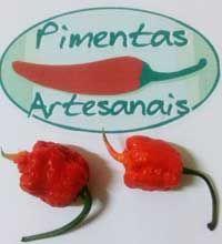 Pimentas Art. - Sementes de Pimenta, Plantio de Pimenta, Bhut Jolokia