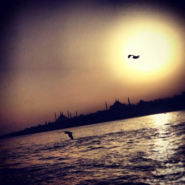 #istanbul #sunset #gull #sun
