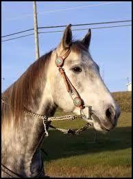 hongre quarter horse