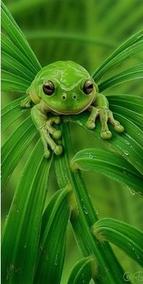 #GREEN | CoLoR Of LiFe | Pinterest | Green, Green frog and Amphibians