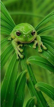 Verde: el verde me lleva a evadirme en la naturaleza. La frescura de la selva.