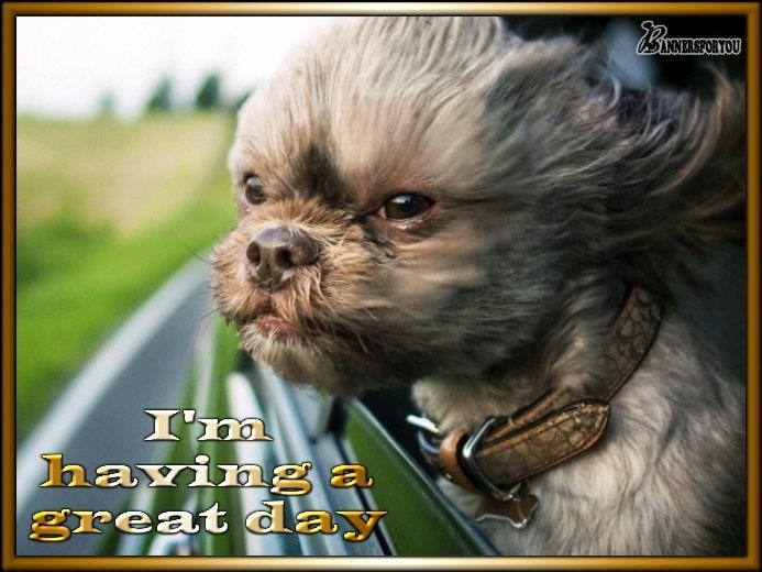 I M Having A Great Day Every Day Of The Week Dogs