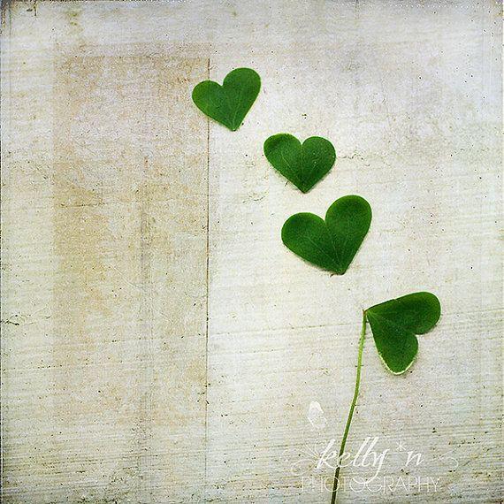 Amour et chance - Shamrock coeurs trèfle Photographie - Photographie - Nature photographie - vert Shamrock coeurs - 8 x 8 Fine Art Print - t...