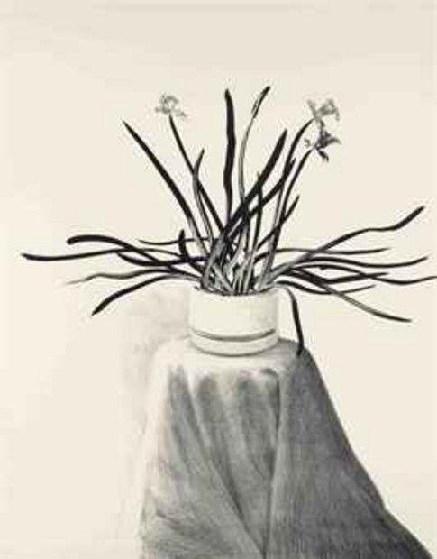 Potted Daffodils - David Hockney