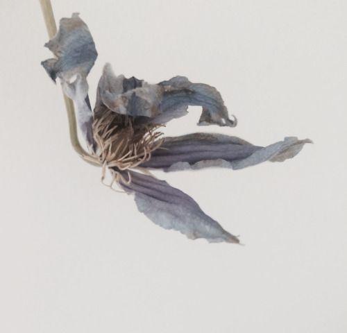 Grey-blue flower.