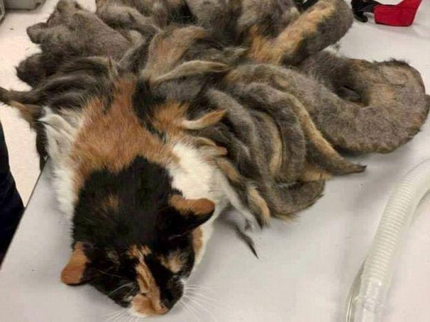 """Kucing terabai tumbuh 'dreadlock'   Hadey.  PENNSYLVANIA - AMERIKA SYARIKAT. Seekor kucing betina yang dipelihara oleh seorang pemilik pelupa yang menghidap Alzheimer terabai sehingga bulunya berubah menjadi panjang dan keras (dreadlock). Laporan Dailymail mengatakan perkara tersebut dimaklumkan oleh sebuah pusat rawatan haiwan yang terletak di Pittsburgh semalam. """"Kucing malang ini dibawa ke pusat kami semalam oleh pemiliknya selepas beliau terpaksa dimasukkan ke rumah orang tua-tua"""" kata…"""