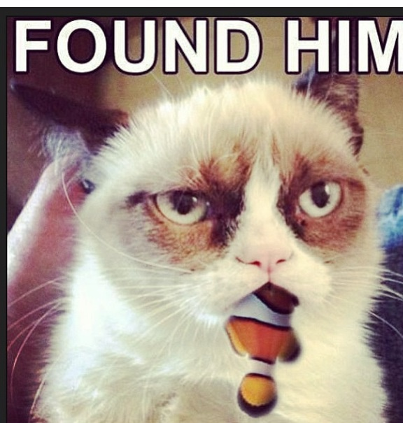 17 Best images about Grumpy kitty on Pinterest   Quokka ...