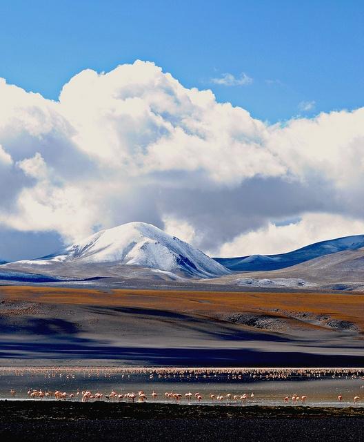 Antofagasta de la Sierra, Provincia de Catamarca, Laguna Blanca ....ARGENTINA