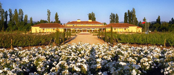 Vina La #Playa Hotel and Winery - #Pinterest-Colchagua-Tours-Hotels