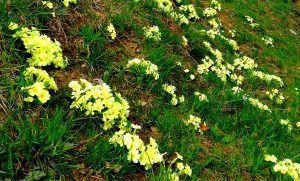 Benvenuta primavera! #risveglio #cambiamento #equinozio #primavera #riti #innovare #energia #meditare #yoga http://www.elenaferro.it/benvenuta-primavera/
