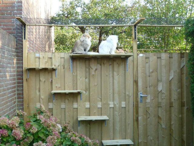katten in de tuin houden - Google zoeken