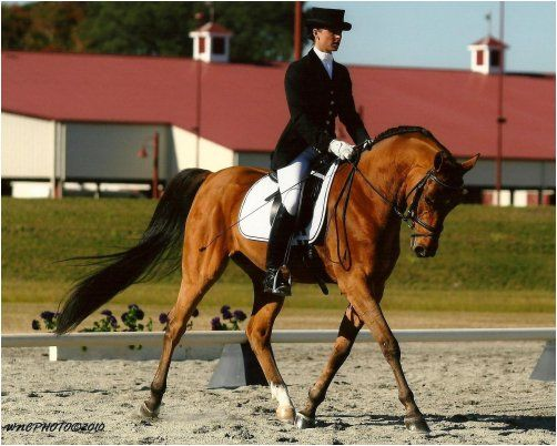 Another NICE Dressage Stallion! - Page 4 - Arabian Horse ... |Arabian Dressage