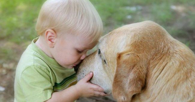 Cani e bambini: ecco le regole per non correre rischi