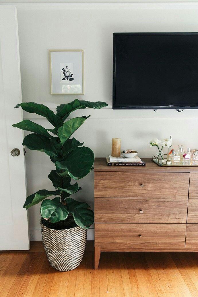 TV room, living room, fiddle leaf fig, mid-century style drawers