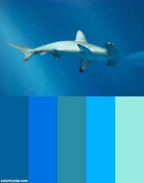 Hammer+Head+Shark,+Outer+Bay+Tank+Dsc_0115+Color+Scheme