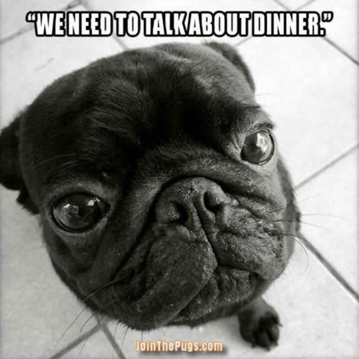 """Our food situation is unacceptable!""  ・・・ www.jointhepugs.com"