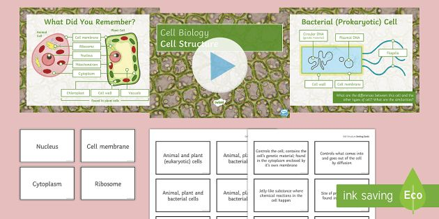 Biology Week Cell Structure Lesson PowerPoint