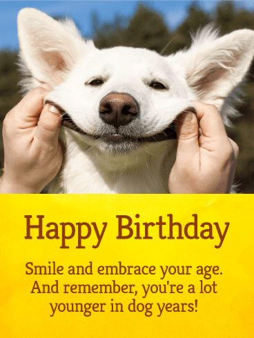 Let's Smile! Funny Birthday Card: Come on! Is there anything cuter than this picture?! For the person who needs to remember to smile on their birthday, you can't go wrong with this one! No one can resist a smiling puppy, especially when the smile is being, well, posed! The picture itself is funny enough, but the joke about being younger in dog years really just sets this birthday card over the top. It's truly a great choice for anyone with an upcoming birthday!
