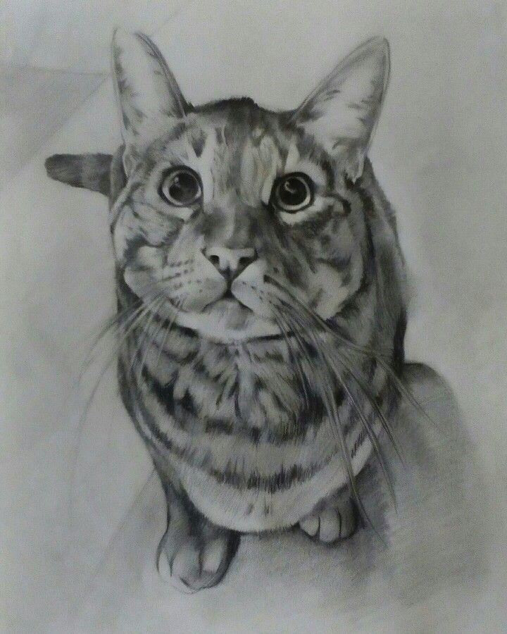 Sketch Potrait on Canson Paper A3 By Artist Mike Eleftheriou Potrait: Cat name Sam