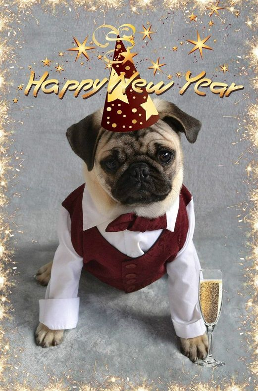 Happy New Year From Boo The Pug #pug #puppy #dog #newyear #celebrate #party #2017 #pets #costume
